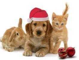 Karácsonyi ajándék ötletek 2012