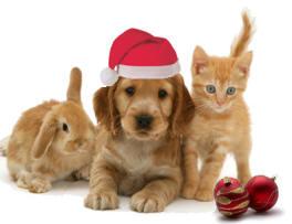 Karácsonyi ajándék ötletek 2011